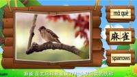 看图识物 第22集 伯劳麻雀乌鸦