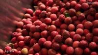 HHP新鲜水果加工