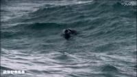150万只企鹅在这片岛屿,上演动物世界最温馨感人的一幕