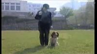 类似训狗师的小说-怎么训练狗狗等待