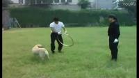 怎么训练狗狗打架-全文阅读