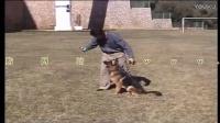 训犬教程-大小便小狗衣服的制作图片