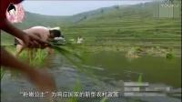 丰胸方法粉嫩公主酒酿蛋总代(uqq9988)金海云酒酿蛋真假2