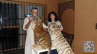 夫妻卖掉豪宅养狮子老虎 已倾家荡产