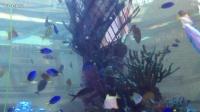 澳门美高梅特大鱼池。