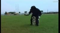 唐伟敏训犬教程-牧羊犬和马犬杂交图片