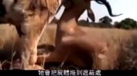 主人带着老虎去打猎,无需动手,坐等老虎送到手里