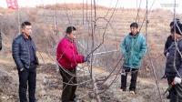 专家现场讲解矮化苹果树的修剪技术