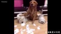 有一种狗叫别人家的狗,实在太聪明了吧!
