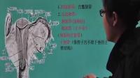 来学网2017卫生资格203初级护理妇产科护理学01女性生殖系统解剖与生理