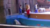 杭州野生动物世界被指虐待动物:白虎被打落水
