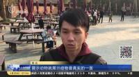 杭州野生动物世界:白虎不愿表演被逼落水  疑似遭受虐待  上海早晨 170125