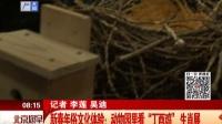 """新春年俗文化体验:动物园里看""""丁酉鸡""""生肖展 北京您早 170126"""