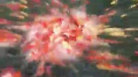 红鲤鱼抢食
