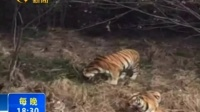 宁波一动物园发生老虎咬人致死事件170130在线大搜索