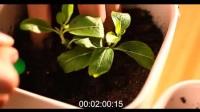 种子种植技术