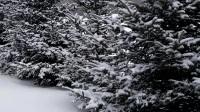 骑行中国  (292天)  2月11日  冬天骑行黑龙江19300公里   拍摄于黑龙江勤得利农场路段