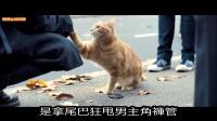 【谷阿莫】5分鐘看完2016因為貓改變人生的電影《流浪猫鲍勃》