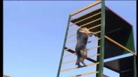 警犬教狗视频教程大全-济南部队有军犬训练