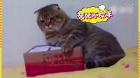 我哪有流氓了 京东优惠券领取 动物搞笑