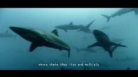 吕心语的动物保护宣言