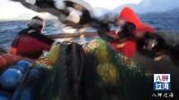 看过加拿大渔民,没看过挪威渔民捕捞北极虾吧,直接在船上煮熟!