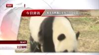 """旅美大熊猫""""宝宝""""回国在即 北京新闻 170217"""