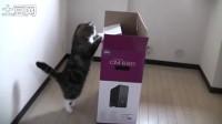 大きな箱とねこ2。-A big box and Maru 2.-