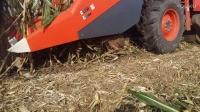 久保田玉米收割机加装前切刀(前粉碎)  青州市强龙机械有限公司
