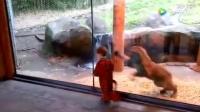 小男孩穿上老虎装以后,小老虎的反应亮了