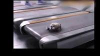 将乌龟放上跑步机,速度简直就是开挂