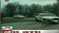 美国警车遭动物另类青睐 狗咬保险杠狼住后备箱