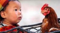 中国大陆H7N9禽流感高发,己致87人死亡