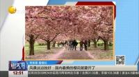 风景这边独好:国内最美的樱花就要开了 说天下 20170226 高清版