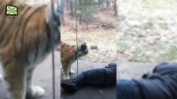 动物园里的猛兽出动 Zoo Animal Attacks