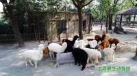 每个人心中都住着一群羊驼