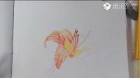 油画花卉 人物速写教程|水彩教程|彩铅绘画|钢笔画教程01跟我一起学线稿素描石膏几何体