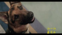 第一首映--一条狗的使命 终极预告
