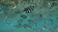 毛里求斯的海底世界