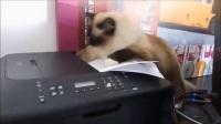 调皮的猫咪,跑打印机里去干嘛,给我弄坏了