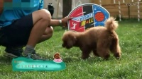 狗狗如何训练大小便 如何驯养小狗 怎么教小狗握手