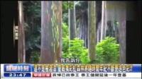 【2016-10-17】关键时刻:这不是被泼漆 夏威夷彩红森林将随时间年纪不断更迭色彩_标清