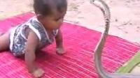 小视频:小孩与蛇