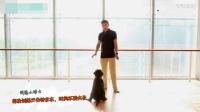 怎样哄狗狗睡觉 训泰迪视频 如何教育狗狗