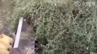 开挖掘机救虎,没想到老虎却死在铁铲之下