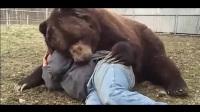 实拍巨熊与男子同眠 秒变温柔熊宝宝