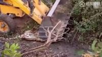 印度老虎被挖掘机压制救援人员行动