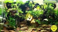 热带鱼:精美的水草造景展