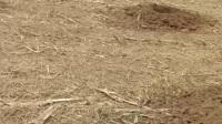 政府征地外包1千一亩每年 结果自己种树 都醒醒吧 别在执迷不悟了 别以为农民没地好 没地了你吃什么喝什么