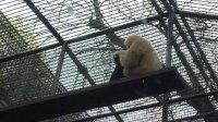 杭州动物园猴子抓虱子